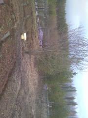 Продаётся земельный участок для ведения садоводства