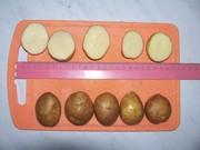 Продаем картофель средний 3-4 см,   2, 50 руб.