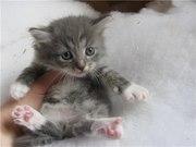 Котёнок-красавец ищет новый дом!