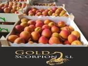 продаем абрикос из Испании